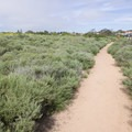 Path back toward the entrance.- Scripps Coastal Reserve