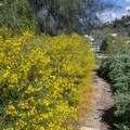 Prolific blooms throughout the park.- Niguel Botanical Preserve