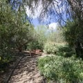 Benches are scattered frequently along the paths.- Niguel Botanical Preserve