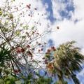 Drought resistant plants.- Niguel Botanical Preserve