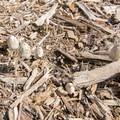 Unidentified species (help us identify it by providing feedback).- Niguel Botanical Preserve