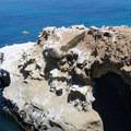 Seals and sea lions frequent the caves.- La Jolla Shores