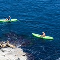 Kayakers cautiously approach the sea lions.- La Jolla Shores