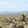 View east toward Pinto Basin from the Cholla Cactus Garden.- Pinto Basin
