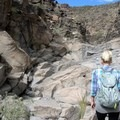 Looking up at the dry falls along the main wash on Trail 100.- Petroglyph Canyon