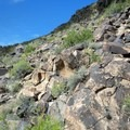 More views of the main gallery along Trail 100.- Petroglyph Canyon