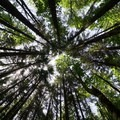 Talls trees shield the trails from sun and rain.- L.L. Stub Stewart State Park Mountain Bike Trails: Freeride + XC Loop