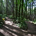 A grade reversal on Caddywhomper.- L.L. Stub Stewart State Park Mountain Bike Trails: Freeride + XC Loop