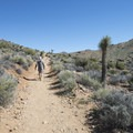 Hiker along the Lost Horse Mine Trail.- Lost Horse Loop Trail