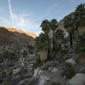 Fortynine Palms Oasis in the Fortynine Palms Canyon.- Fortynine Palms Oasis Hike