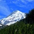 Mount Hood from Vista Ridge.- Cairn Basin + McNeil Point via the Vista Ridge Trail