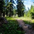 Trail at Cairn Basin.- Cairn Basin + McNeil Point via the Vista Ridge Trail