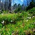 - Cairn Basin + McNeil Point via the Vista Ridge Trail
