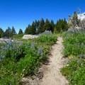 Trail to McNiel Point.- Cairn Basin + McNeil Point via the Vista Ridge Trail