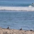 Trestles is home to world-class surf breaks.- Trestles Beach
