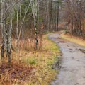 The trail to Lampson Falls is mostly flat and wide.- Lampson Falls