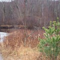 A spur trail leads to the calm upper stretch of river.- Lampson Falls