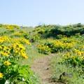 Trail to Marsh Hill.- Memaloose Hills Trail