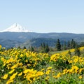 Mount Hood from Marsh Hill.- Memaloose Hills Trail