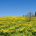 Chatfield Hill.- Memaloose Hills Trail