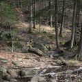 Sections of the trail are rocky.- Auger Falls