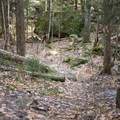 The trail consists of gently rolling hills through open forest.- Auger Falls