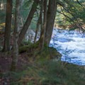 Upstream of the falls, the trail parallels the river.- Auger Falls