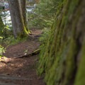 The Auger Falls Trail.- Auger Falls