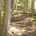 The trail is very rooty.- Moss Glen Falls