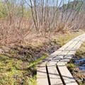 The boardwalk traverses the muddiest sections of trail.- Moss Glen Falls