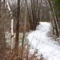 The logging road leads to several loop trails.- Mills Riverside Park