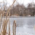 The pond at Mills Riverside Park.- Mills Riverside Park