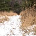 Hiking through Mills Riverside Park.- Mills Riverside Park