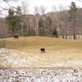 Looking into the horse pasture on the northeast end of the park.- Mills Riverside Park