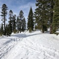 - Donner Ridge Snowshoe via Glacier Way Trailhead