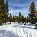Glacier Way Trail.- Donner Ridge Snowshoe via Glacier Way Trailhead