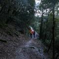 On the trail to Burstarse Falls.- Burstarse Falls Hike via Pacific Crest Trail