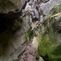 Lots of moss growing on the canyon walls.- Crack In The Ground
