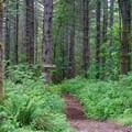 The climbing trail for the Freeride Park.- Summit Ridge Mountain Bike Trails