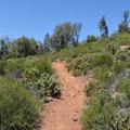 Canyon Oak Trail.- Canyon Oak Trail