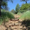 Hiking through some tall grass along the Canyon Oak Trail.- Canyon Oak Trail