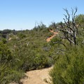 Another view from the Canyon Oak Trail.- Canyon Oak Trail
