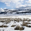 Lamar Valley in the northern area of Yellowstone National Park.- Lamar Valley