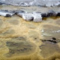 Mammoth Hot Springs, Yellowstone National Park.- Mammoth Hot Springs