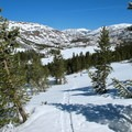 The summit is not immediately visible from the road. Instead, the route initially climbs to a prominent bench due east of the road.- Mount Dana Backcountry Ski