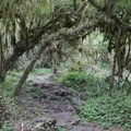 The trail between the two craters.- Los Gemelos