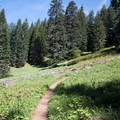 Meadow along the Iron Mountain Trail.- Iron Mountain