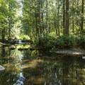 Whatcom Creek above Whatcom Falls.- Whatcom Falls Park