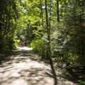 The main trail through Whatcom Falls Park.- Whatcom Falls Park