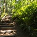 Trails within Whatcom Falls Park.- Whatcom Falls Park
